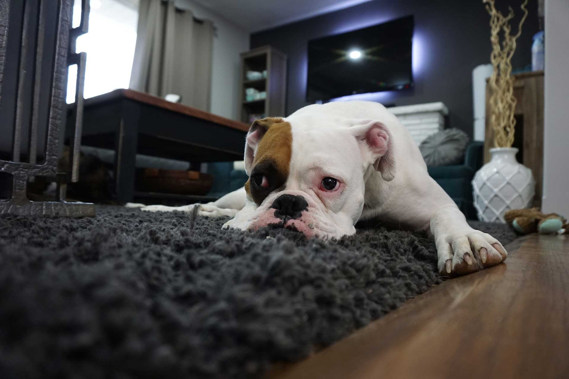 The High Cost of Cheap Rugs